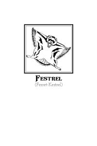 Illustration Festrel (3)