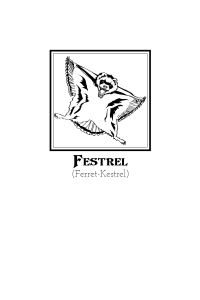 Illustration Festrel (3)